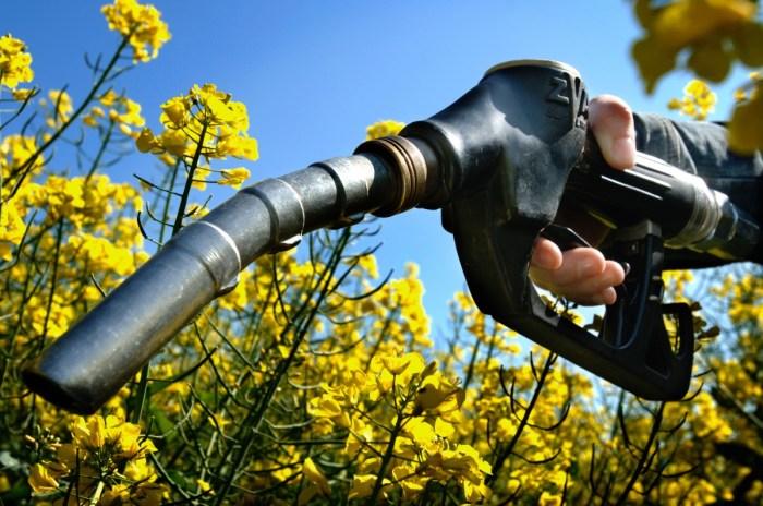 bio fuel manutacturing