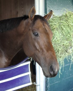 Bobby's Kitten at Keeneland - Keeneland Photo