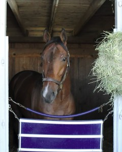 Camelot Kitten at Keeneland - Keeneland Photo