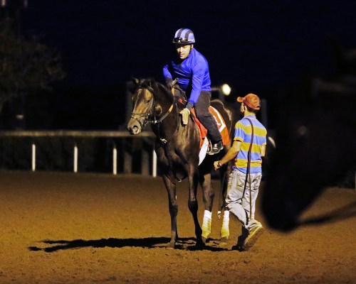 Breeders' Cup Juvenile Turf (gr. I) contender Conquest Daddyo visits the main track at Keeneland early in the morning on October 12th - Keeneland Photo