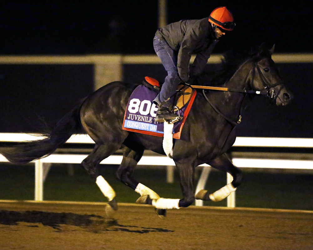 Conquest Daddyo - Morning Gallop - Keeneland Race Course - 10231