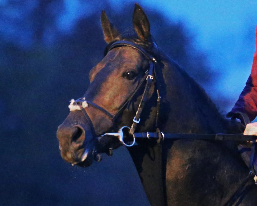 Golden Horn - Morning Training - Keeneland Race Course - 102715