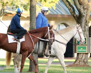 I'm a Chatterbox at Keeneland on October 11th - Keeneland Photo