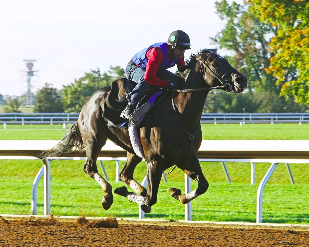 Limousine Liberel breezing five furlongs in :59 3/5 on October 16th at Keeneland - Keeneland Photo