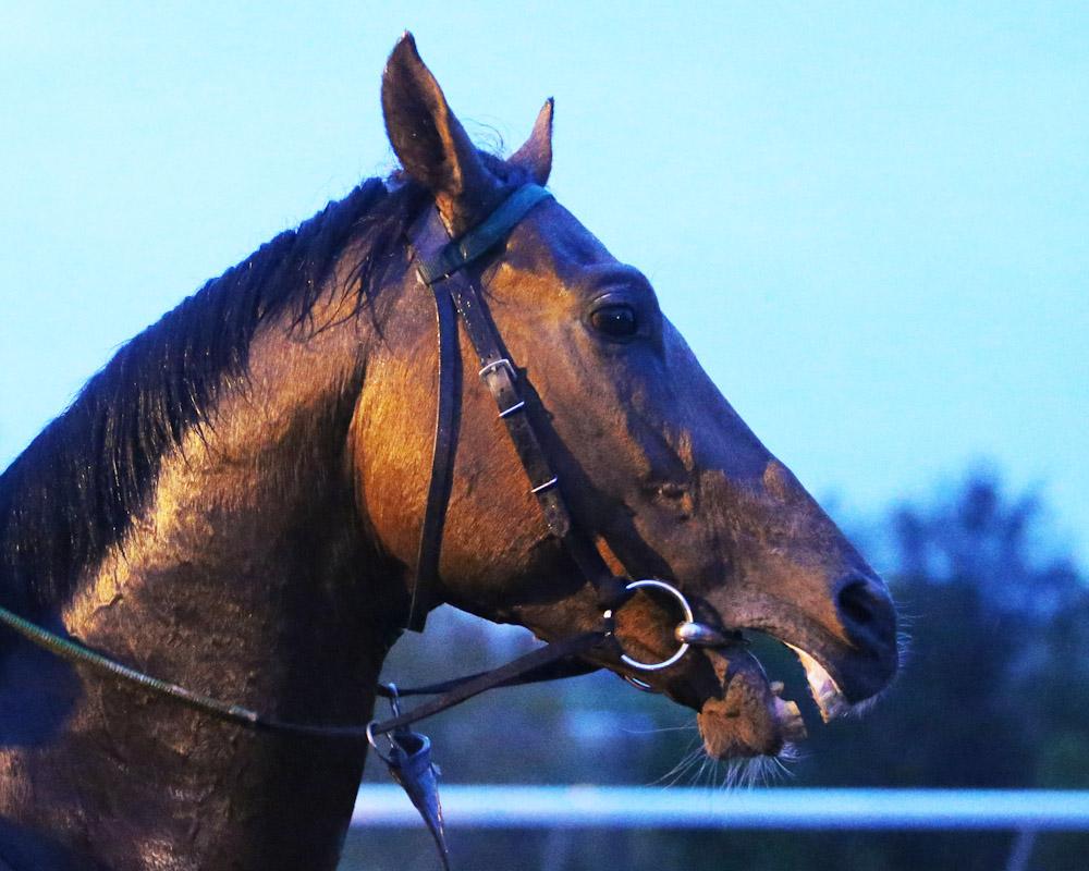 Mondialiste - Morning Training - Keeneland Race Course - 102715