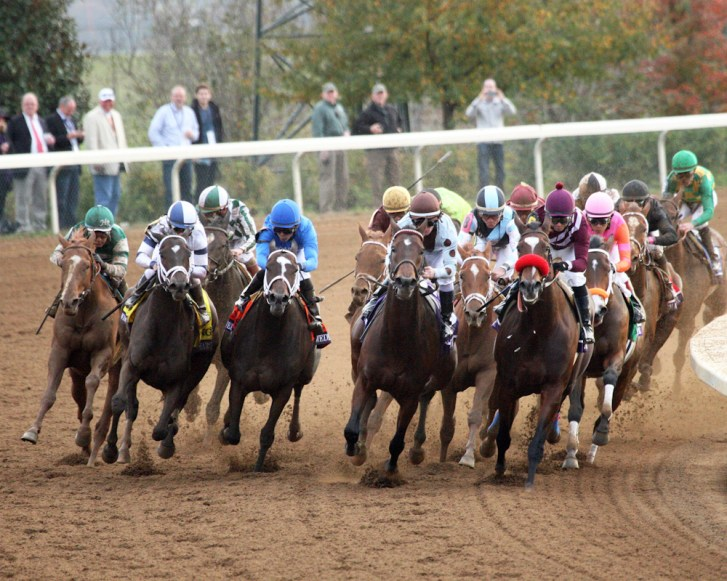 The field turns for home in the 2015 Breeders' Cup Distaff - Coady Photography/Keeneland Photo
