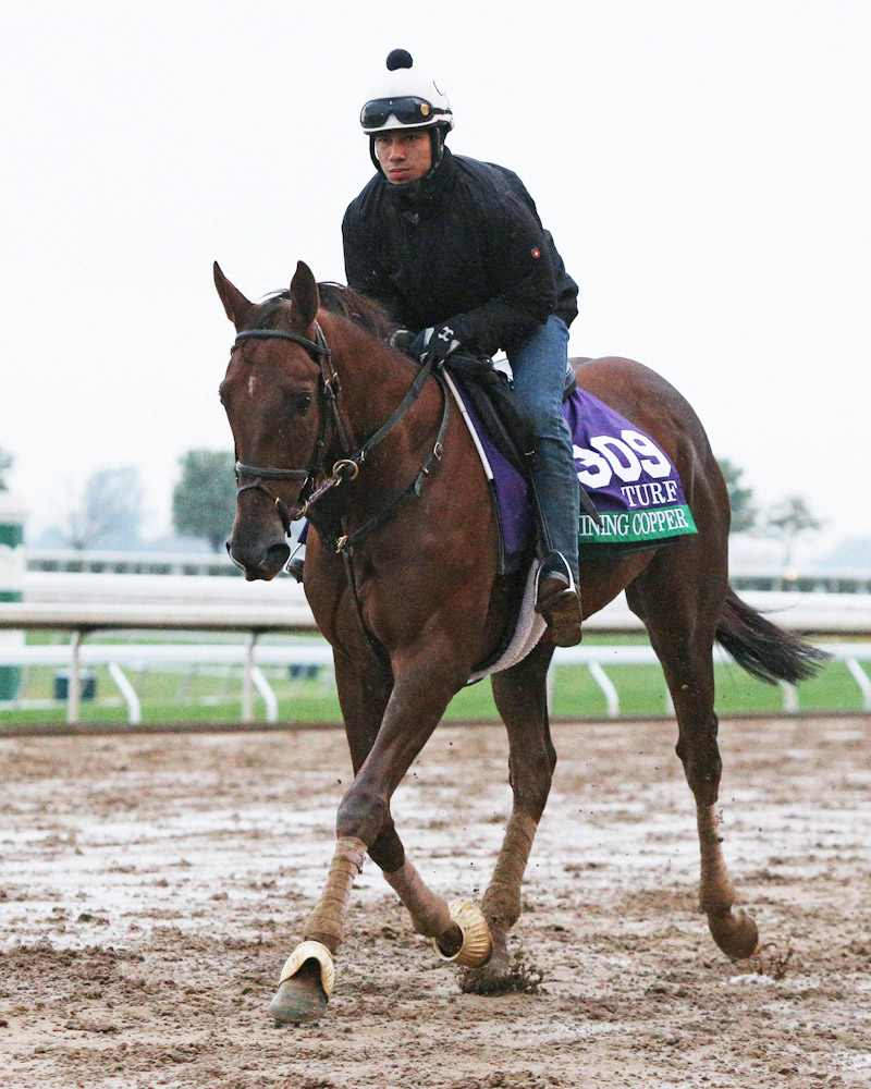 Shining Copper - Morning Training - Keeneland - 102715