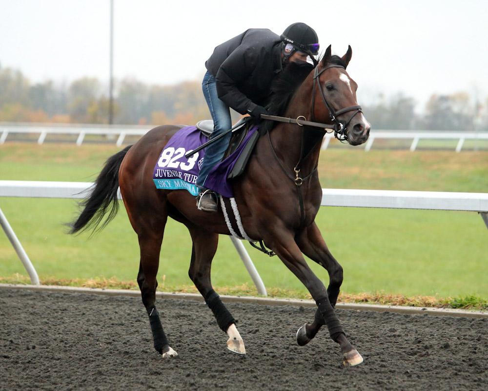 Sky Marshal - Morning Training - Keeneland Race Course - 102715