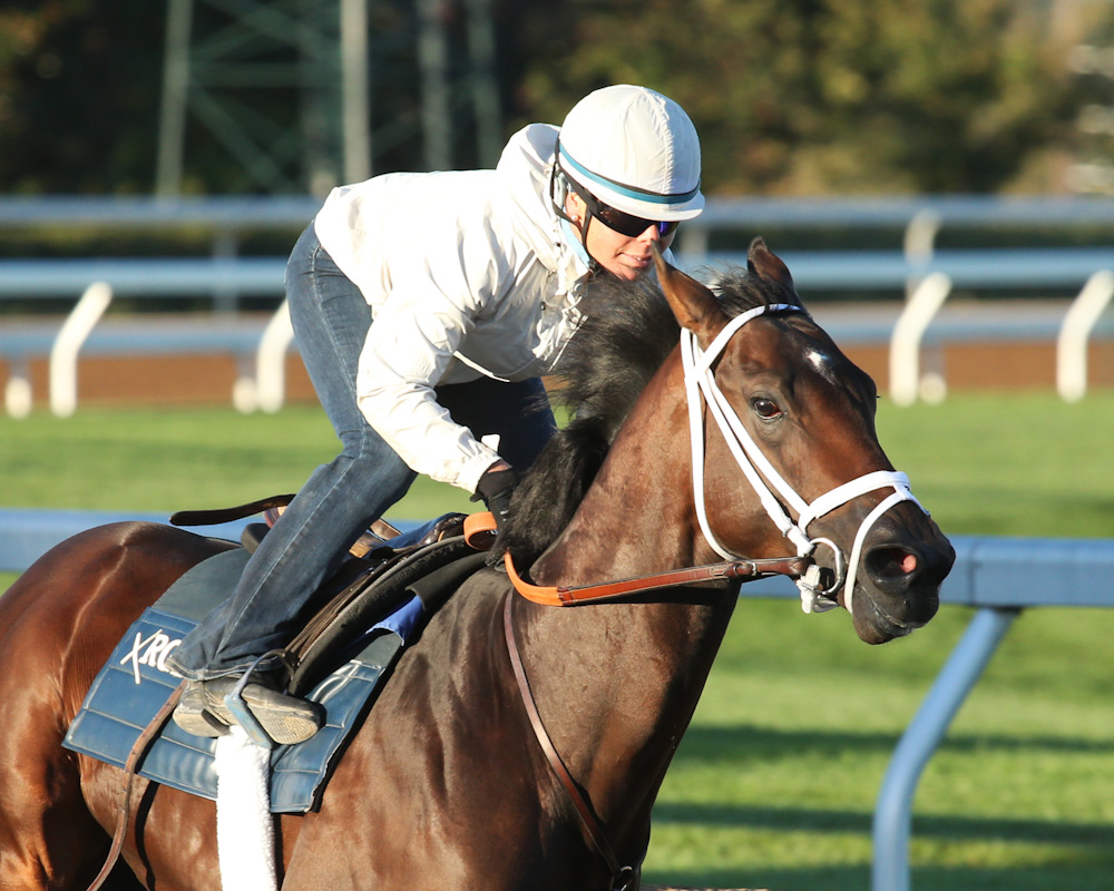 Sticksstatelydude working a half-mile at Keeneland on October 16th - Keeneland Photo