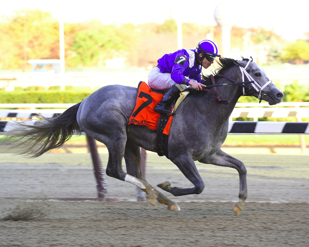 Mohaymen winning the 2015 Remsen Stakes (gr. II) at Aqueduct - Photo by NYRA/Coglianese Photos