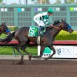Mor Spirit rallies to defeat stablemate Toews On Ice in the 2015 Los Alamitos Futurity (gr. I) - © BENOIT PHOTO
