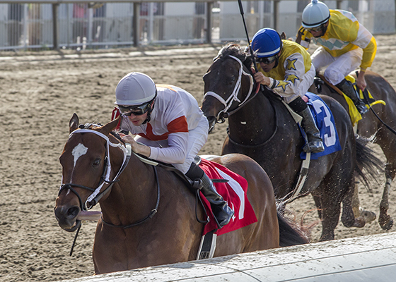 Cinco Charlie with Florent Geroux aboard, wins the Duncan F. Kenner Stakes at the Fair Grounds Race Course in New Orleans, LA Saturday, February 2016 Alexander Barkoff / Hodges Photography
