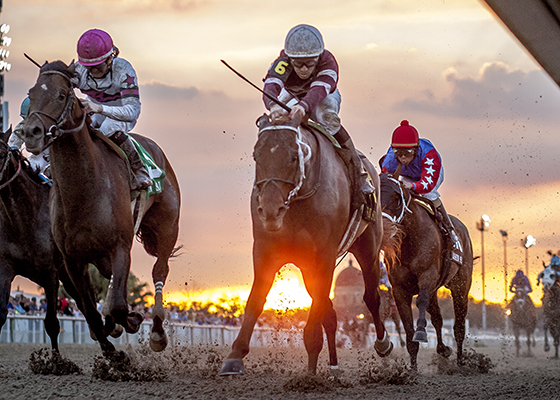 Slideshow: Louisiana Derby Preview Day