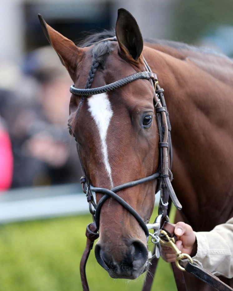 """Brody's Cause, winner of the Blue Grass Stakes (gr. I), is among the """"dual qualifiers"""" targeting the Kentucky Derby - Keeneland Photo"""