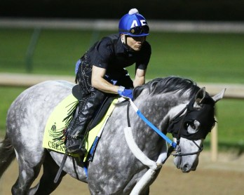 Creator galloping at Churchill Downs on April 20th - Coady Photography