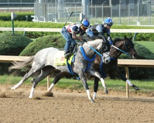 Creator breezing at Churchill Downs on April 25th - Coady Photography