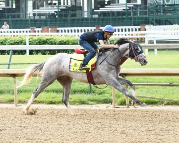 Lani breezing at Churchill Downs - Coady Photography
