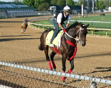 Majesto galloping at Churchill Downs on April 24th - Coady Photography