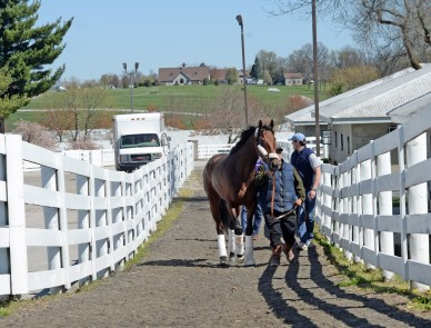 Nyquist arrives at Keeneland - Keeneland Photo