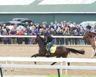 Exaggerator galloping at Churchill Downs on May 4th - Coady Photography