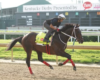 Majesto galloping at Churchill Downs - Coady Photography