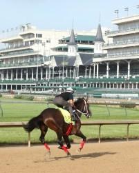 Majesto galloping at Churchill Downs - Coady Photography