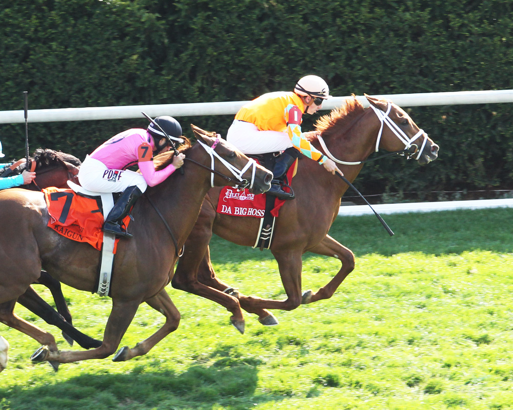 Can Da Big Hoss Stretch Out in the Belmont Gold Cup?