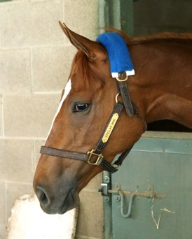 Stellar Wind - Coady Photography