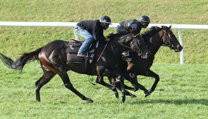 Lady Aurelia Posts Penultimate Pre-Breeders' Cup Workout (Video)