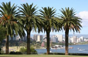 Canary Island Date Palm Avenue overlooking Perth city.