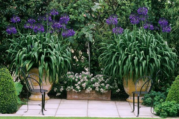 Best Summer Flowers Pots