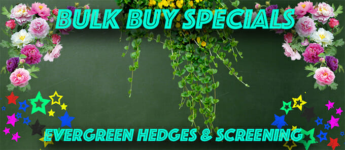 evergreen-hedge-screening-new-2