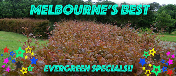 melbournes-best-evergreen-specs