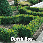 Dutch Box HALF copy