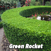 Green Rocket HALF copy