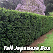 Tall Jap Box HALF copy