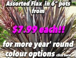 Flax Assorted Button Pic copy
