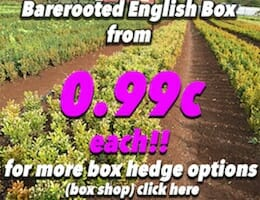 Barerooted Eng Box Button Pic 99c copy