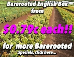 Barerooted Eng Box Button Pic copy