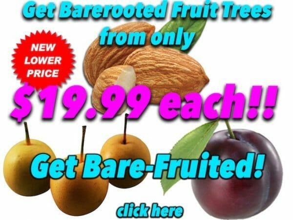 Barerooted Fruit Trees copy