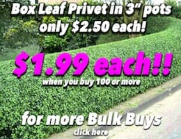 Box Leaf Privot Button Pic Bulk Buy copy