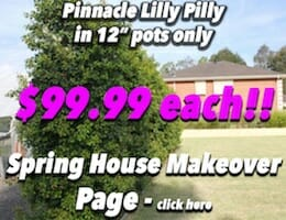 Pinnacle Lilly Pilly Button Pic copy