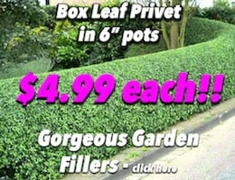 Box Leaf Privot Button Pic Small Cheap Nasty copy