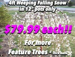 4ft Falling Snow Potted Button Pic copy