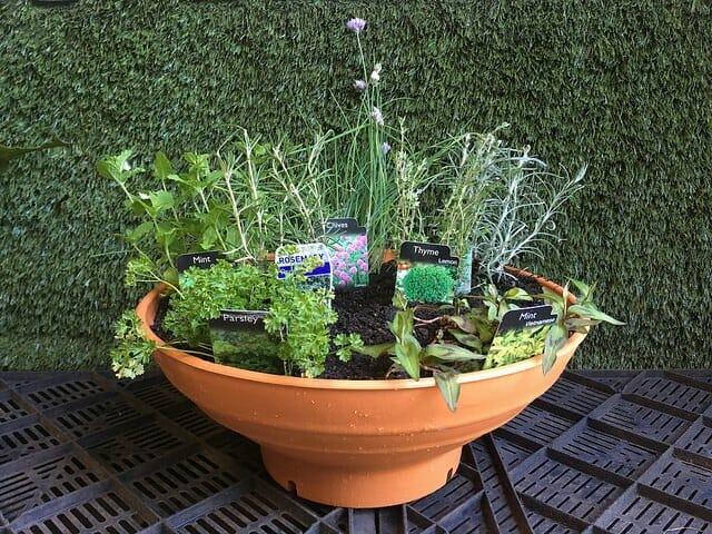 Potted Herb Garden 16u2033 Pot ...