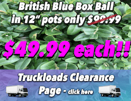 british-blue-box-12inch