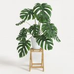 "Monstera ""Fruit Salad Plant"" @ Hello Hello Plants"