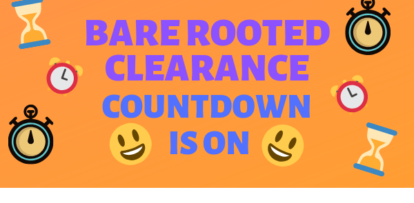 📣 Get Bare Rooted 📣