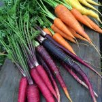 Carrots 'Rainbow Mix' @ Hello Hello Plants