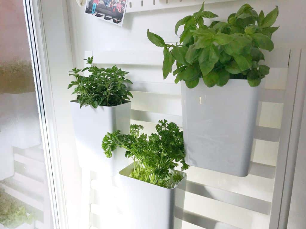 indoor salad garden made out of a cot side | august Home Etc favourite